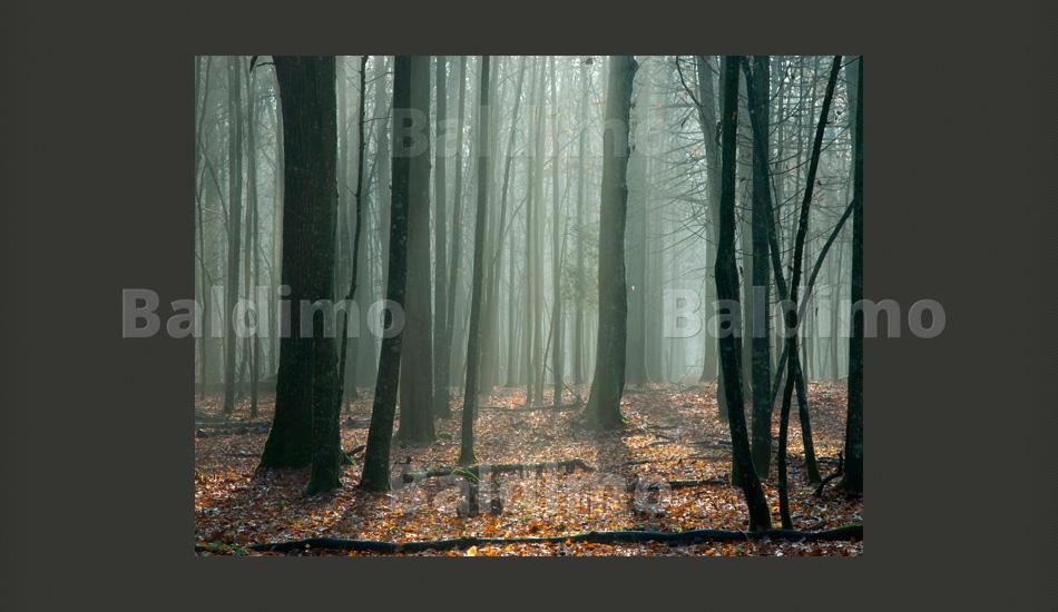 vlies fototapete tapeten wandbilder tapete natur 100403 105 ebay. Black Bedroom Furniture Sets. Home Design Ideas