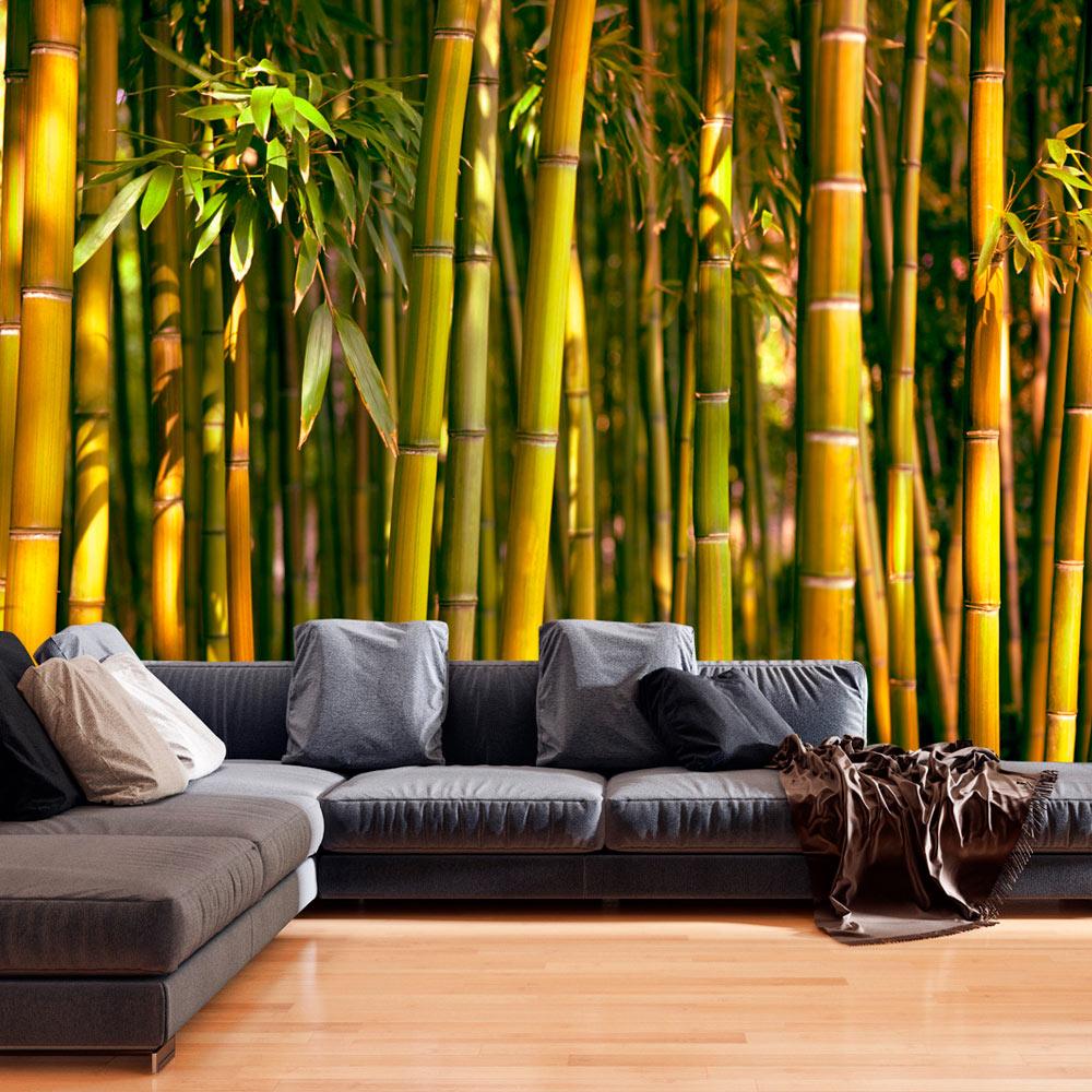 fototapete bambus vlies tapete gr n natur wandbilder xxl 3. Black Bedroom Furniture Sets. Home Design Ideas