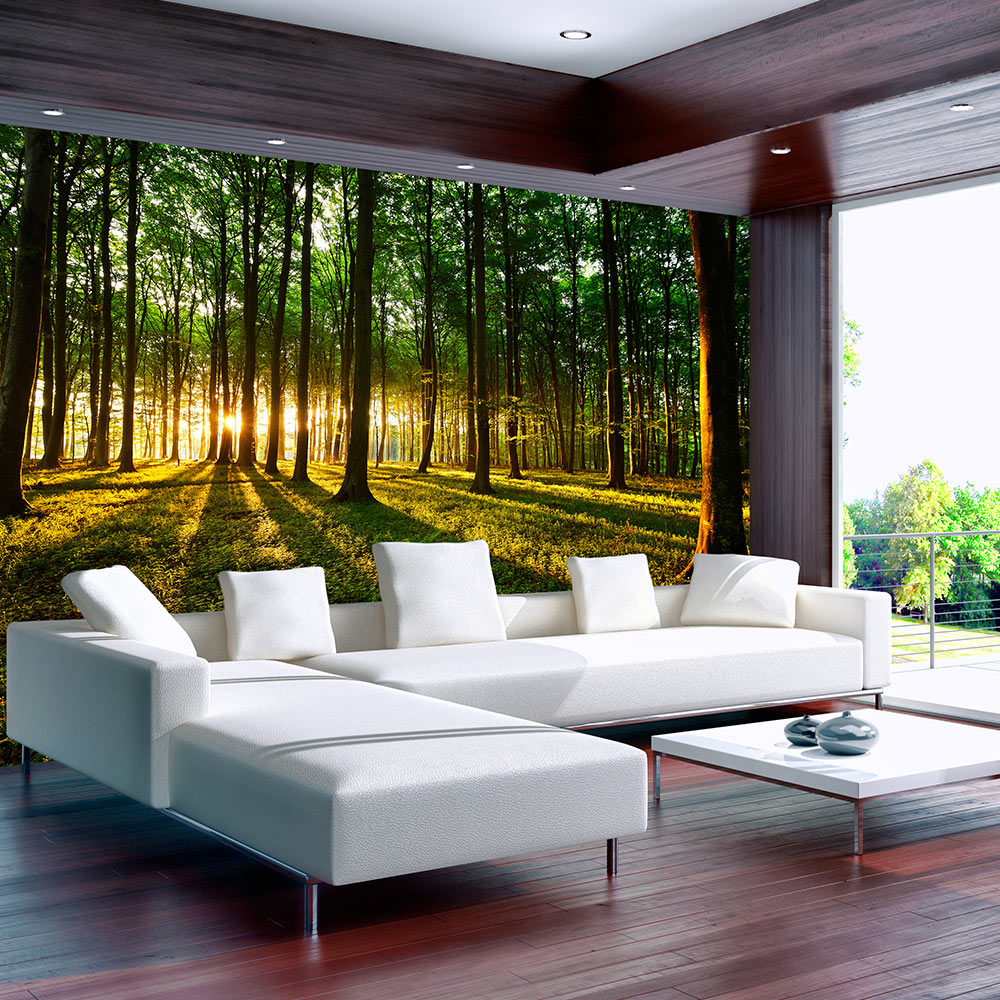 vlies fototapete 3 farben zur auswahl tapeten wald sonnenschein c b 0027 a b ebay. Black Bedroom Furniture Sets. Home Design Ideas