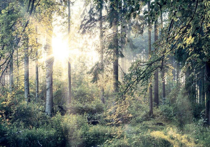 Photo Wallpaper Non-woven //Self-adhesive Forest Nature c-C-0032-a-b fleece