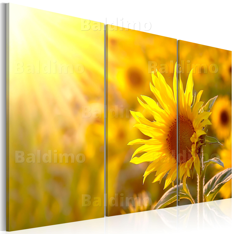 wandbilder xxl sonnenblume blume natur leinwand bilder wohnzimmer 030210 23 ebay. Black Bedroom Furniture Sets. Home Design Ideas
