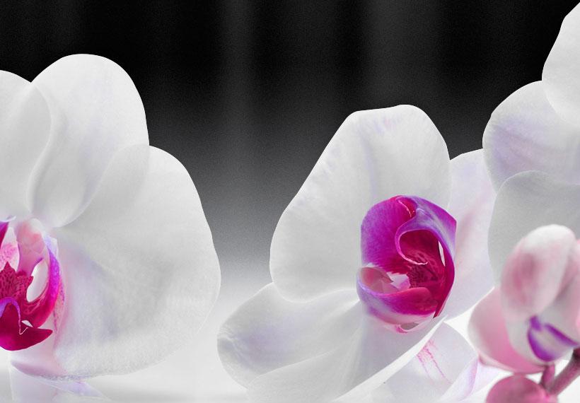 Fleurs Orchidée Zen Spa peintures murales images XXL toile canevas b-a-0253-b-b
