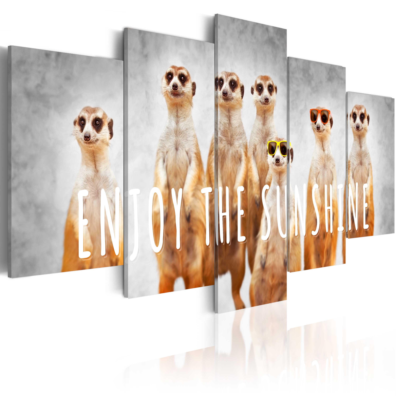 Wunderbar Farbe In Bildern Von Tieren Galerie - Druckbare ...