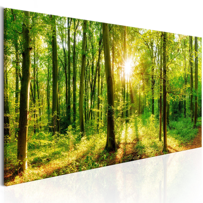 wandbilder xxl wald landschaft ausblick natur leinwand bilder c b 0184 b a ebay. Black Bedroom Furniture Sets. Home Design Ideas