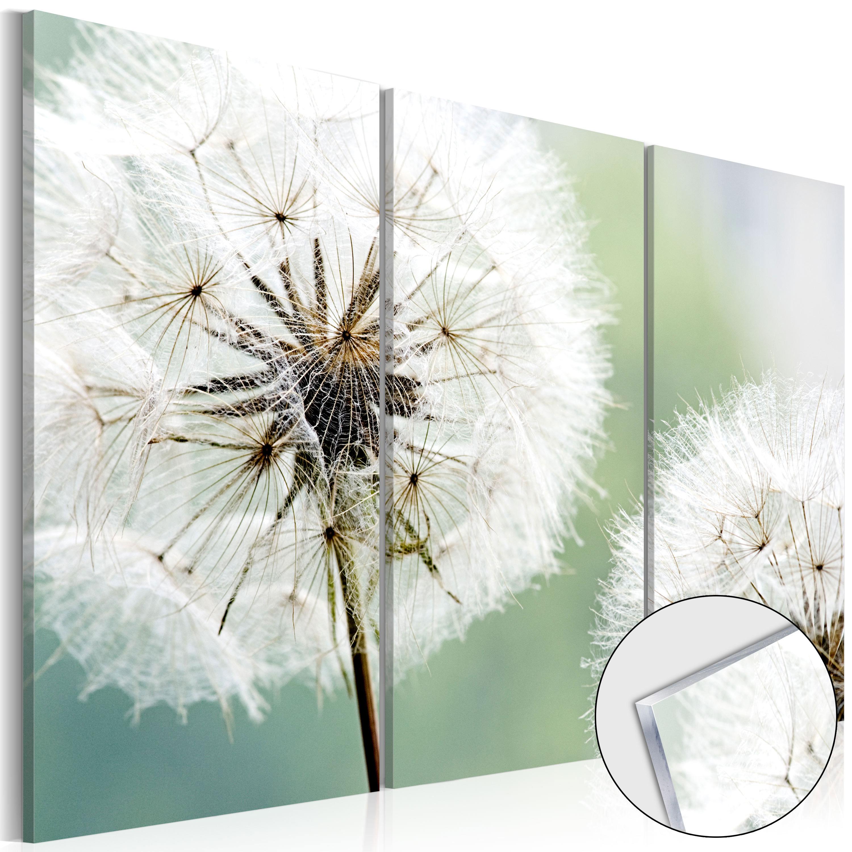 Quadri su vetro acrilico - Fluffy Dandelions [Glass] 120X80 cm