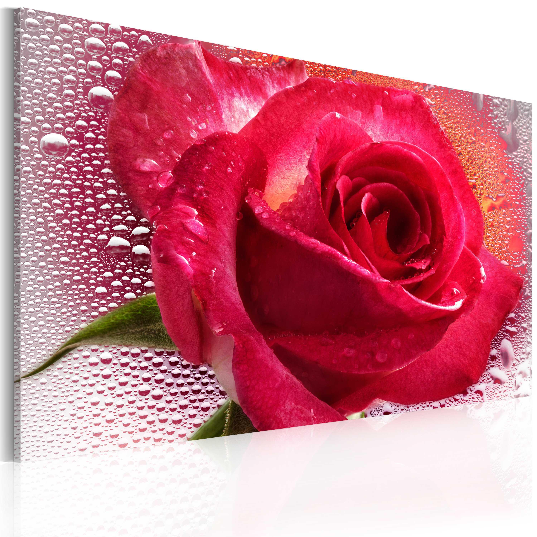 Tableau - Lady Rose