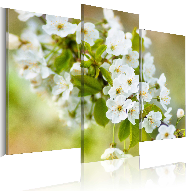 Quadro - Motivo con fiori bianchi di amarena 60X50 cm