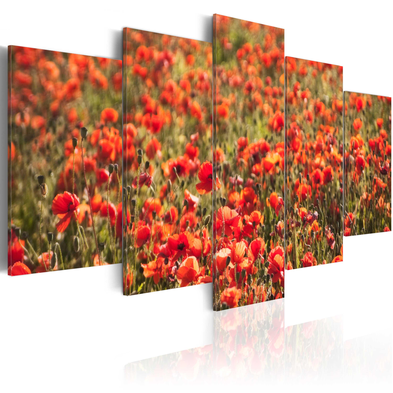 Quadro - Papaveri rossi su un prato verde 100X50 cm