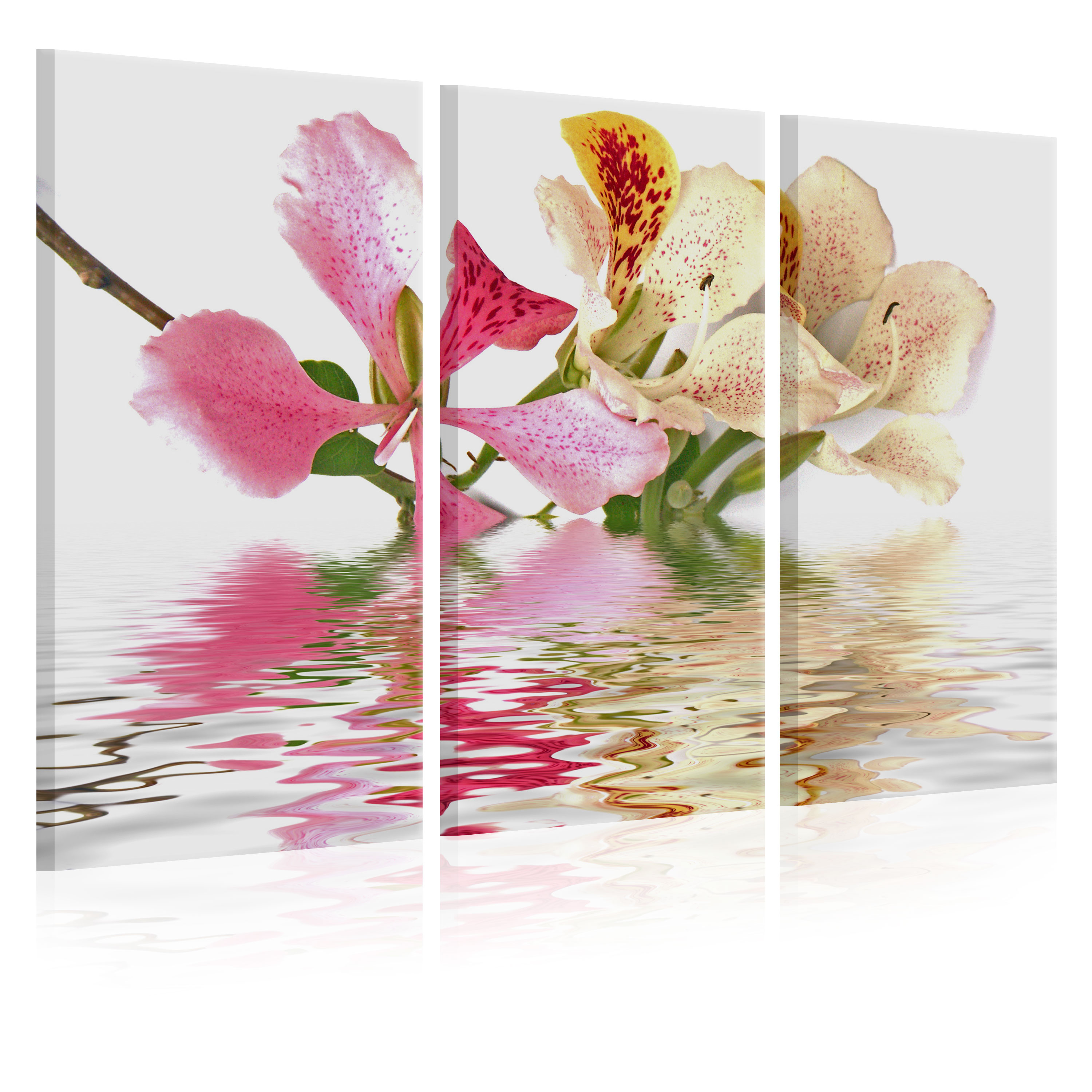 Tableau - Orchid with colorful spots