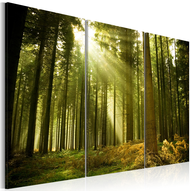 Tableau - Forêt - beauté de la Nature