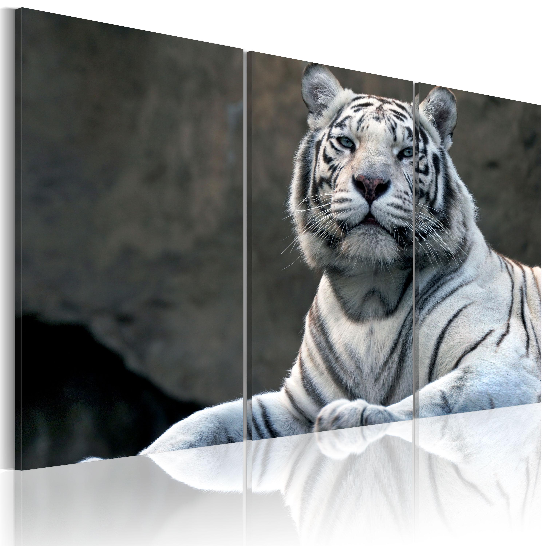Quadro - Tigre bianca 60X40 cm