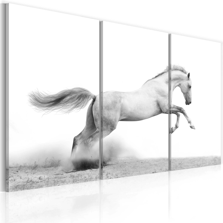 Quadro - Cavallo al galoppo 60X40 cm