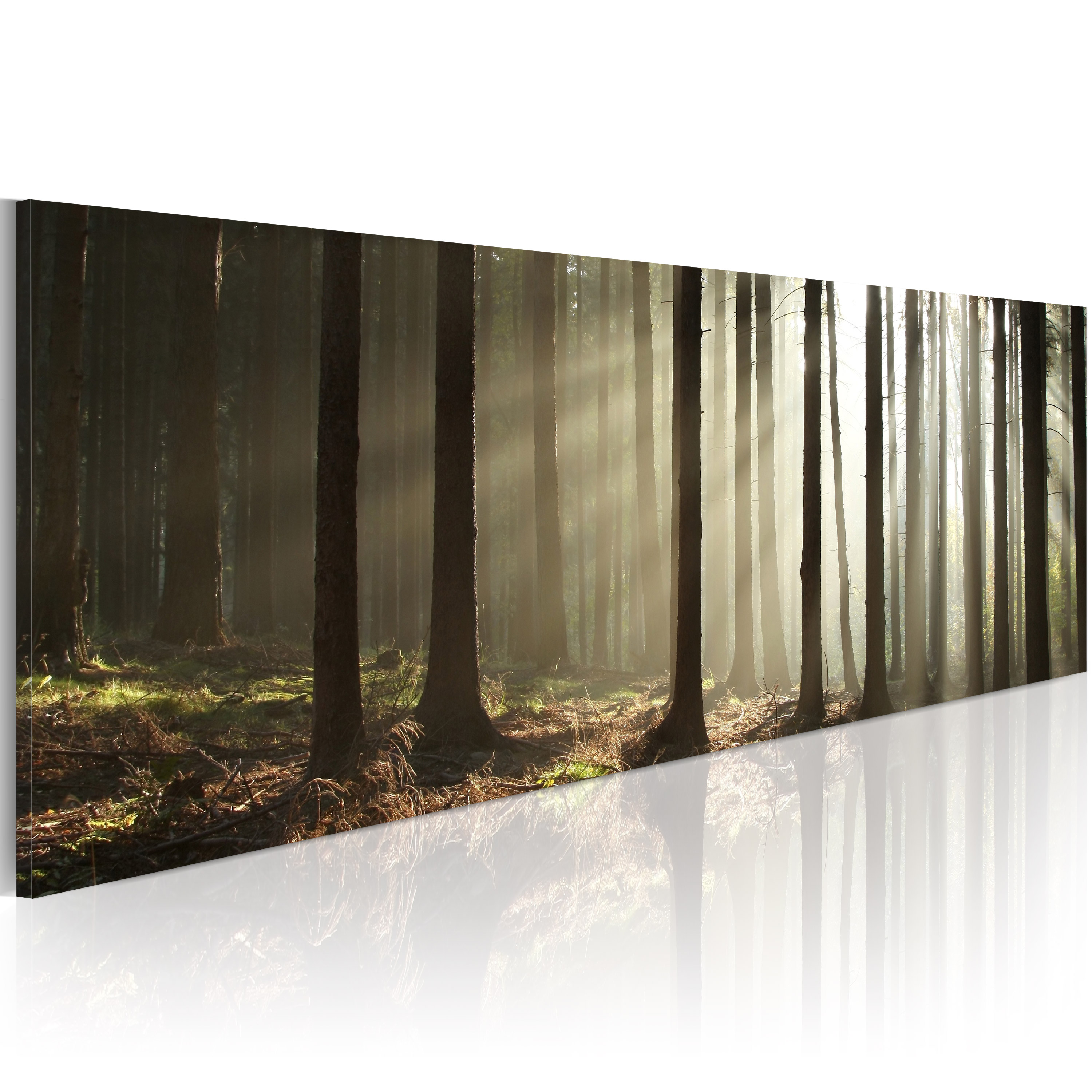 Quadro - Canvas print - Morning in the woods 120X40 cm